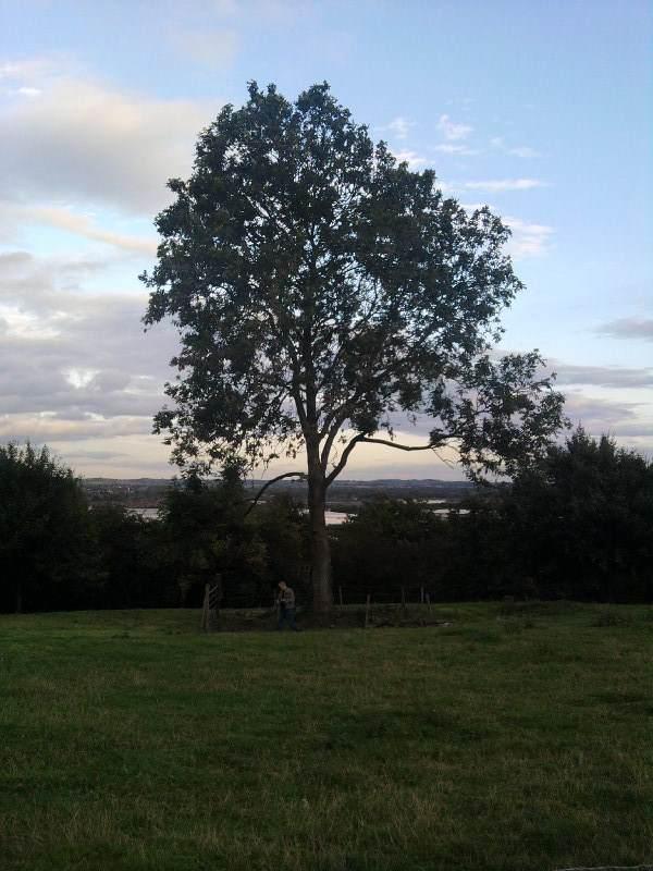 sinai house hanging tree