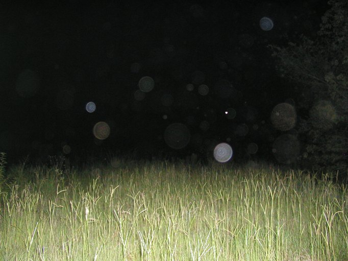 Ghost Orbs Caught On Tape Hovering Above Field, Ghost Sightings