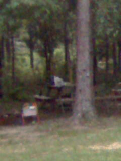 this was taken at our campsite. Look beside a small chair beside firepit, and picnic table...